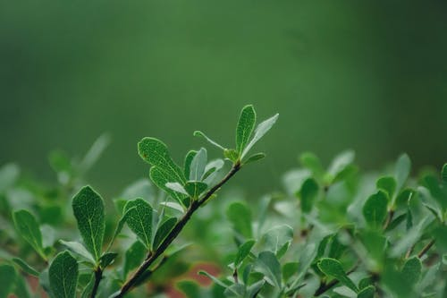 Free stock photo of green, green leaves, mother nature, nature