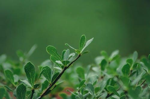 Foto d'estoc gratuïta de fulles verdes, mare naturalesa, natura, naturalesa