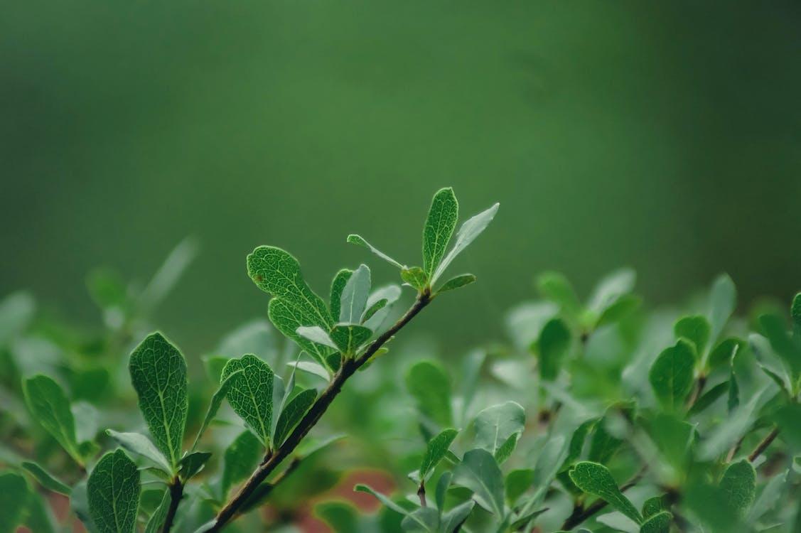Foto stok gratis alam, daun-daun hijau, hijau