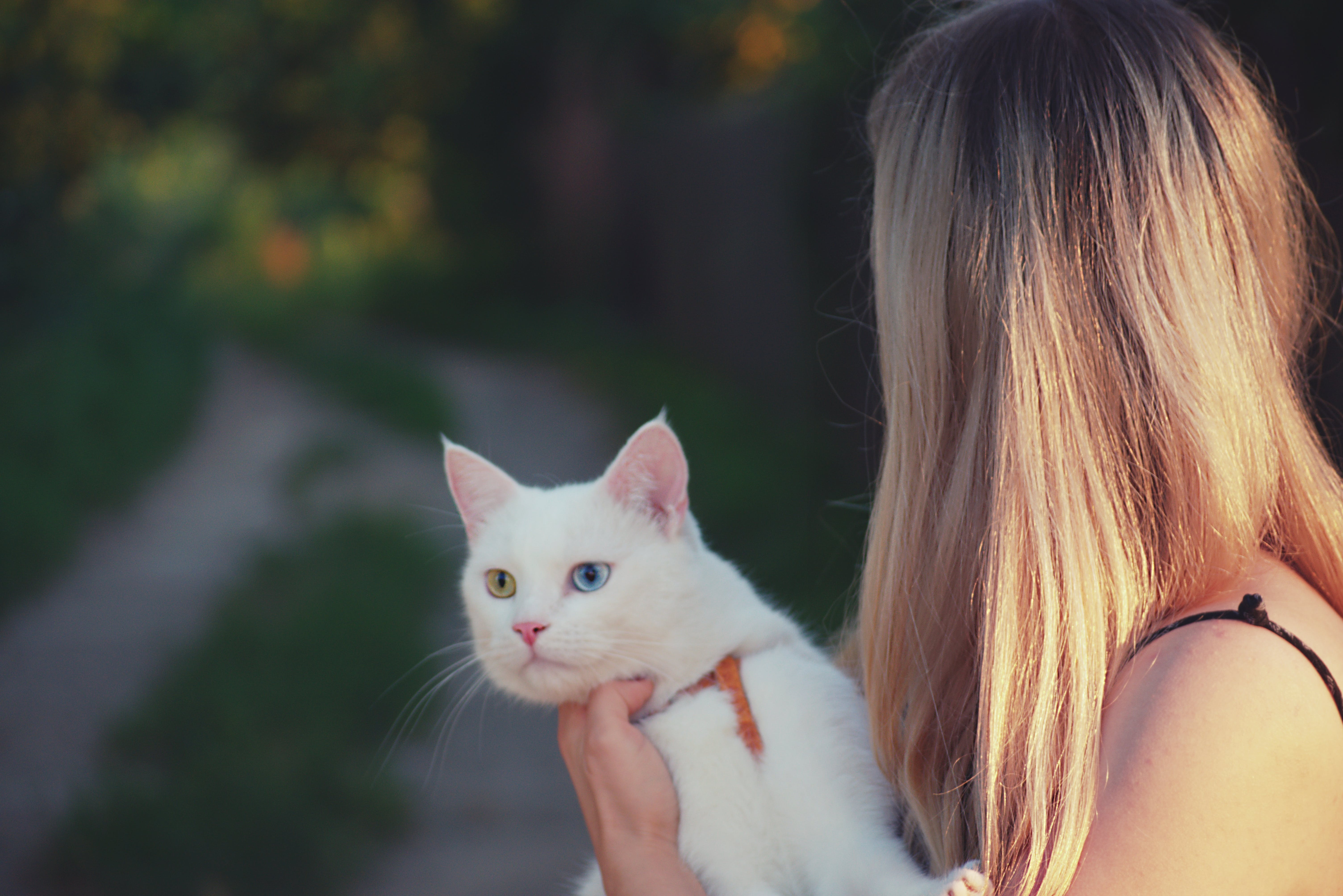 Woman Carrying White Cat