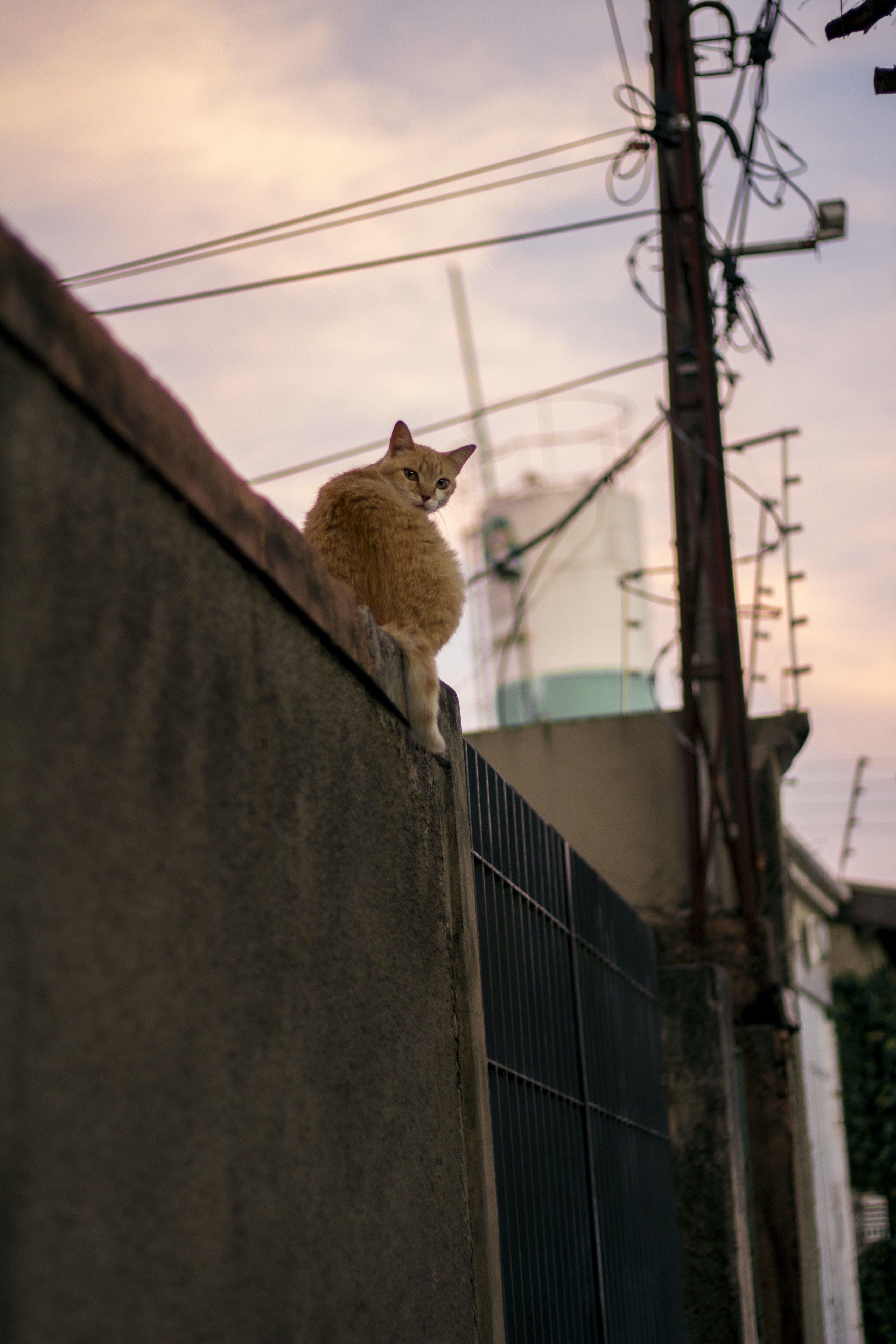 Free stock photo of animal, canon, canont5, cat