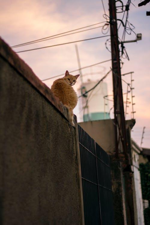 Ảnh lưu trữ miễn phí về bánh gato, con mèo, con vật, không thể5