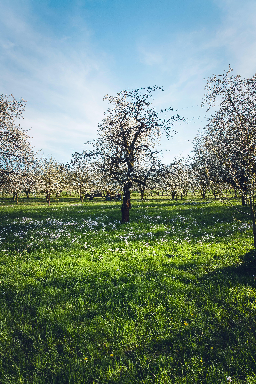 Trees at Green Field