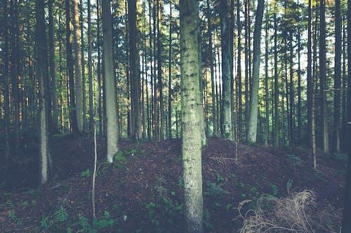 Fotobanka sbezplatnými fotkami na tému kmene stromov, lesy, malebný, pôda