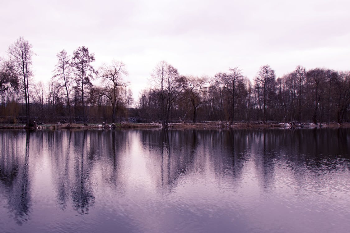 Free stock photo of still, trees, water