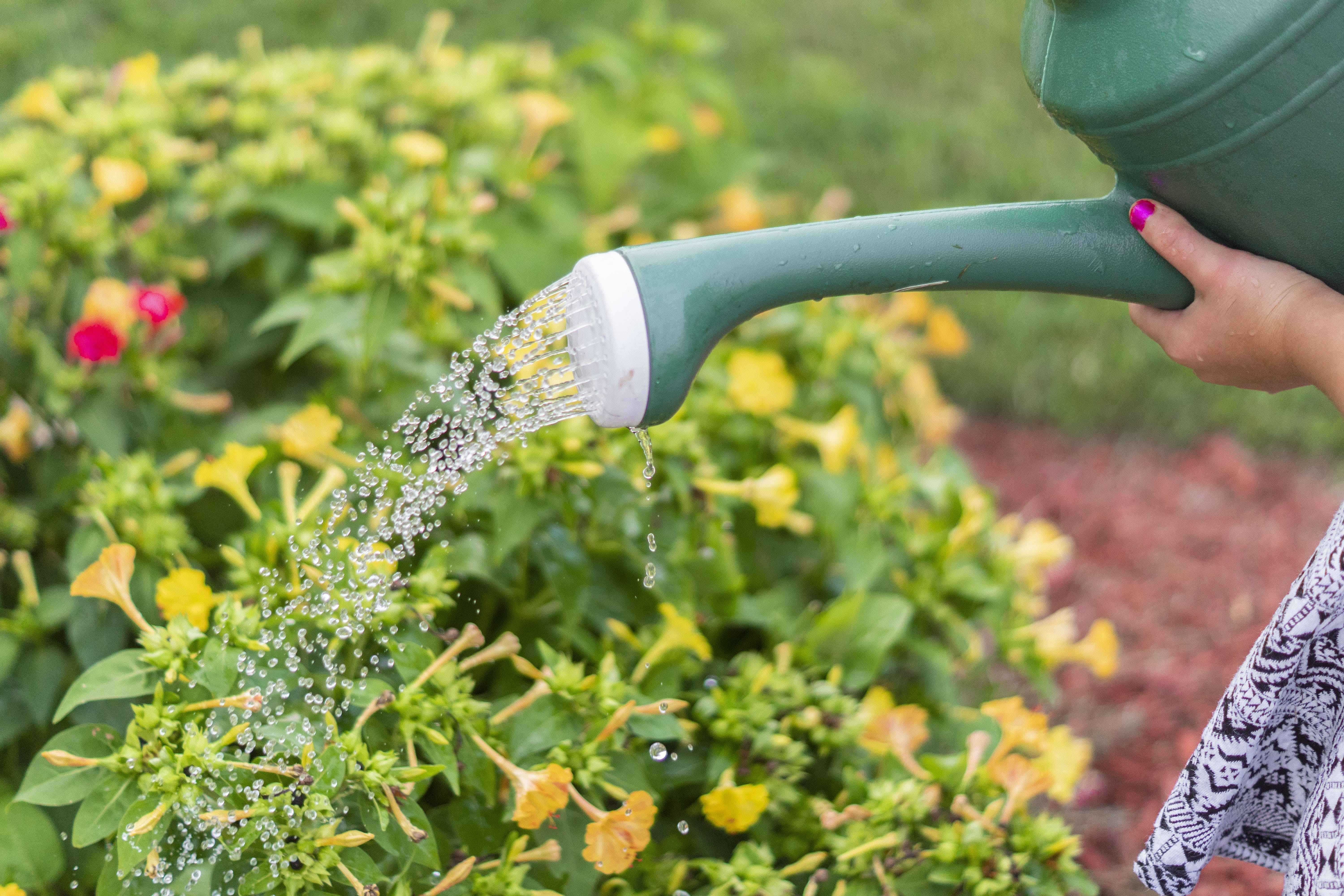 Person using Watering Can