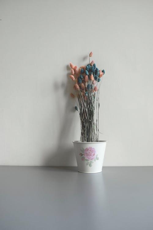 Gratis stockfoto met binnen, binnenshuis, bloemen, bloempot