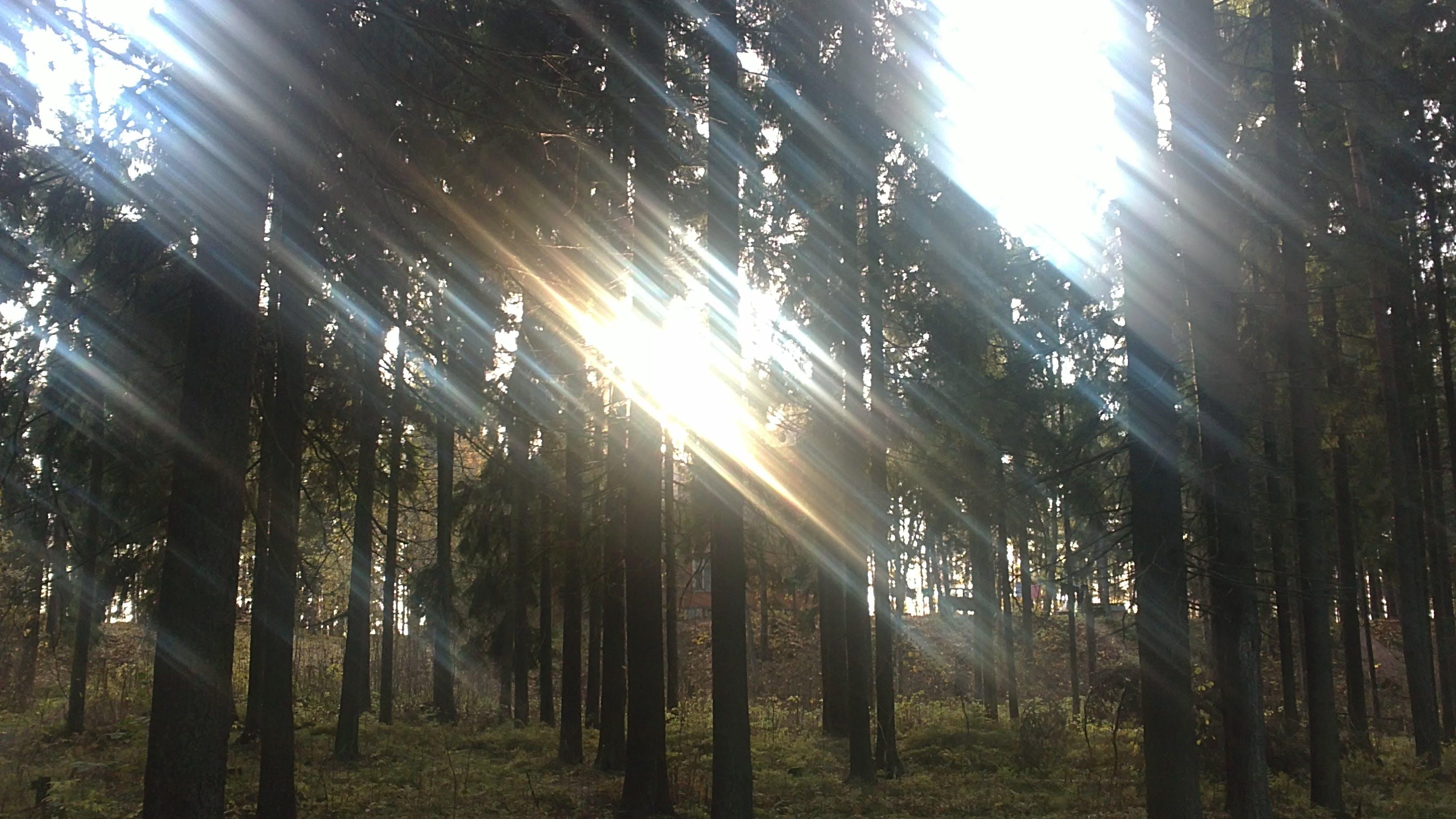 Free stock photo of light, pin, sunny, trees