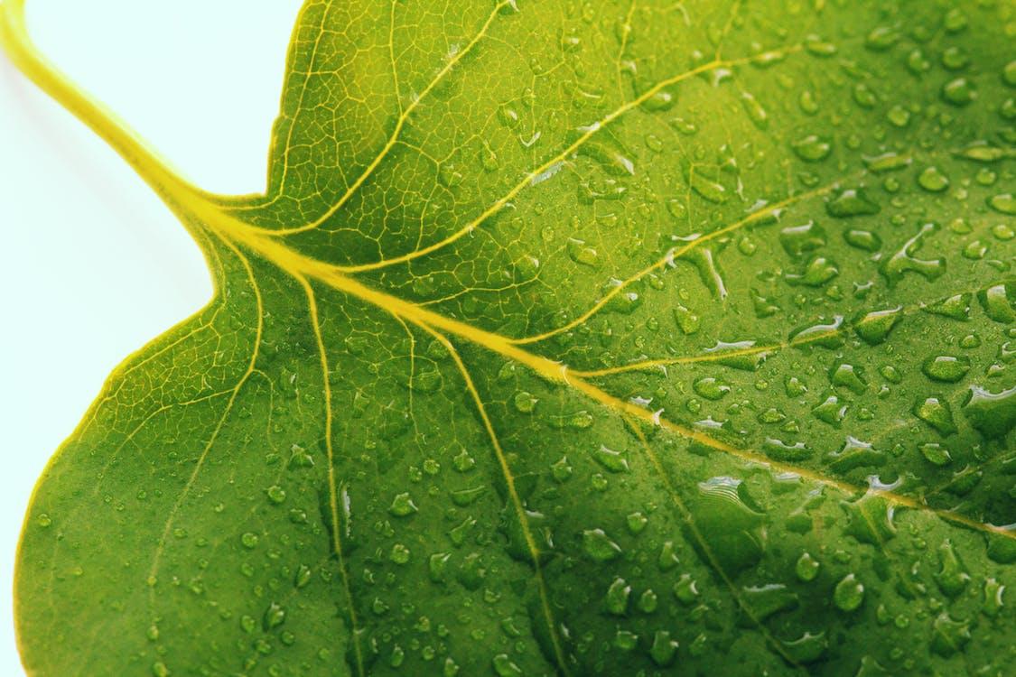 Foto profissional grátis de água, folha verde, fotografia de pequenos seres