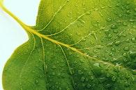 water, leaf, dew
