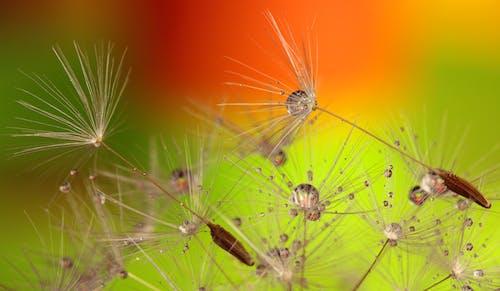 天性, 宏觀, 植物, 植物群 的 免费素材照片