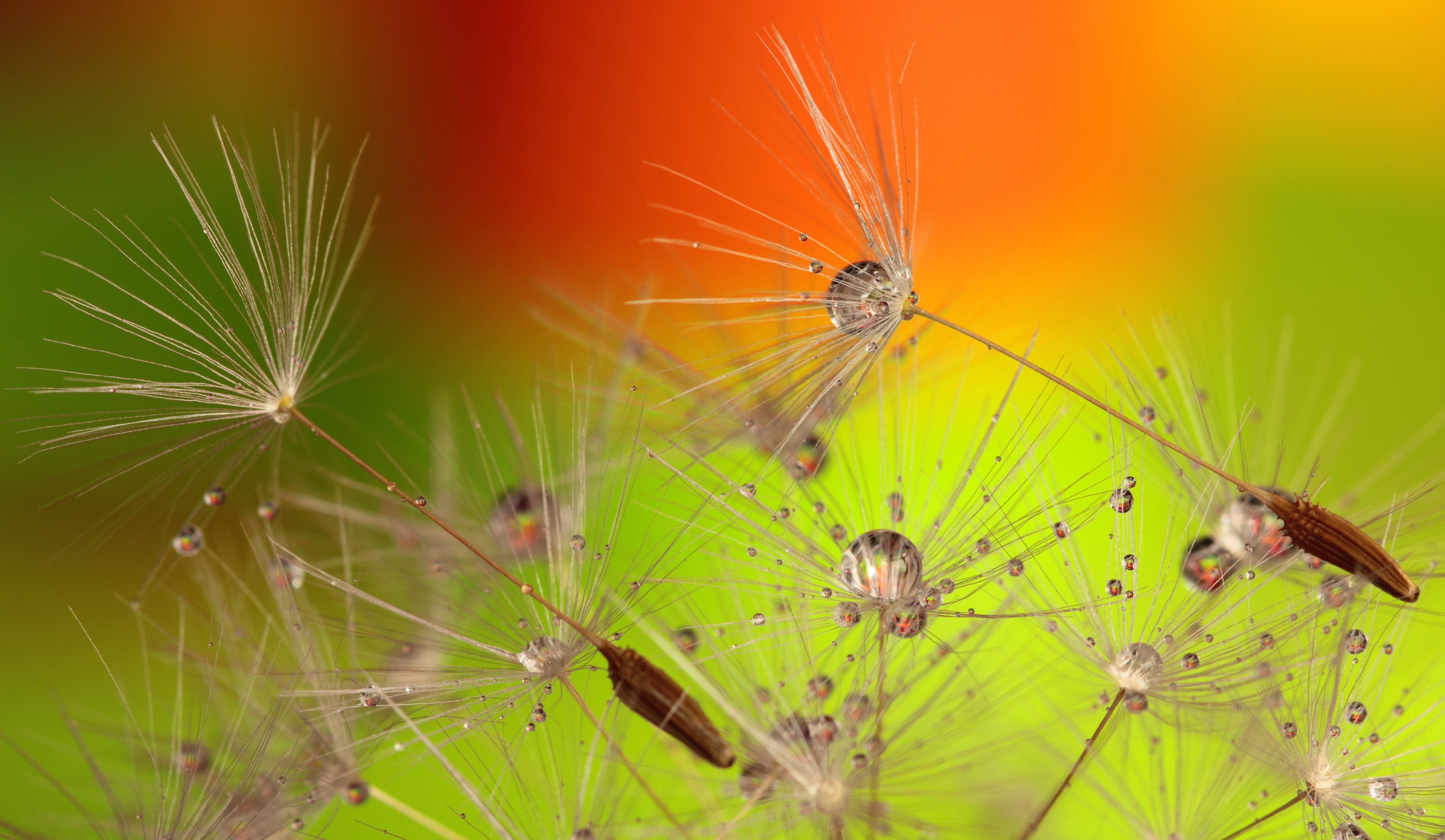 Petaled Flowers With Dew Drops On Close Up Photography