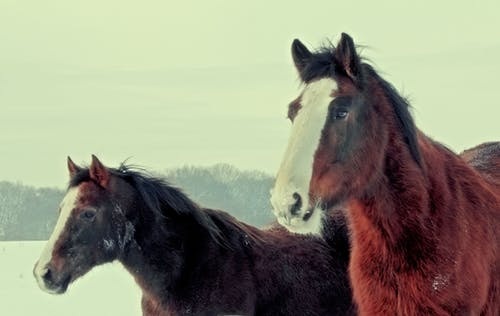 Free stock photo of animals, brown, horse, horse head