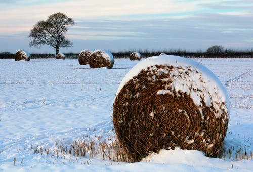 Free stock photo of farm, field, hay, hay bale