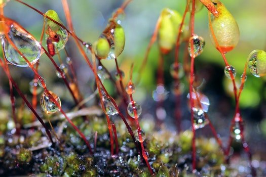 Free stock photo of water, moss, plant, dew