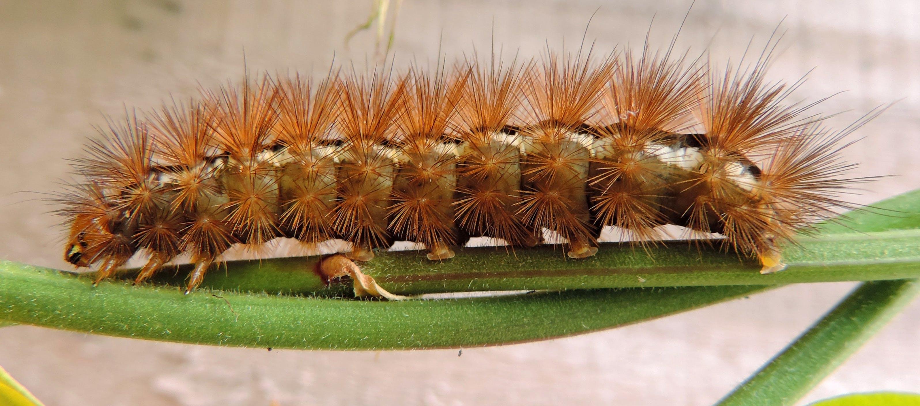 Close-up Photography of Brown Moth Caterpillar