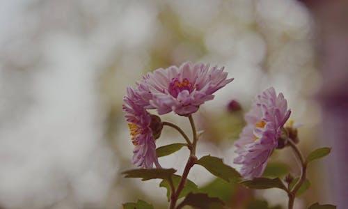 Ilmainen kuvapankkikuva tunnisteilla hauras, kasvikunta, kasvu, kesä