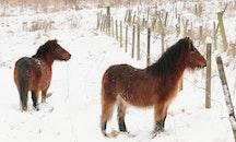 snow, winter, farm