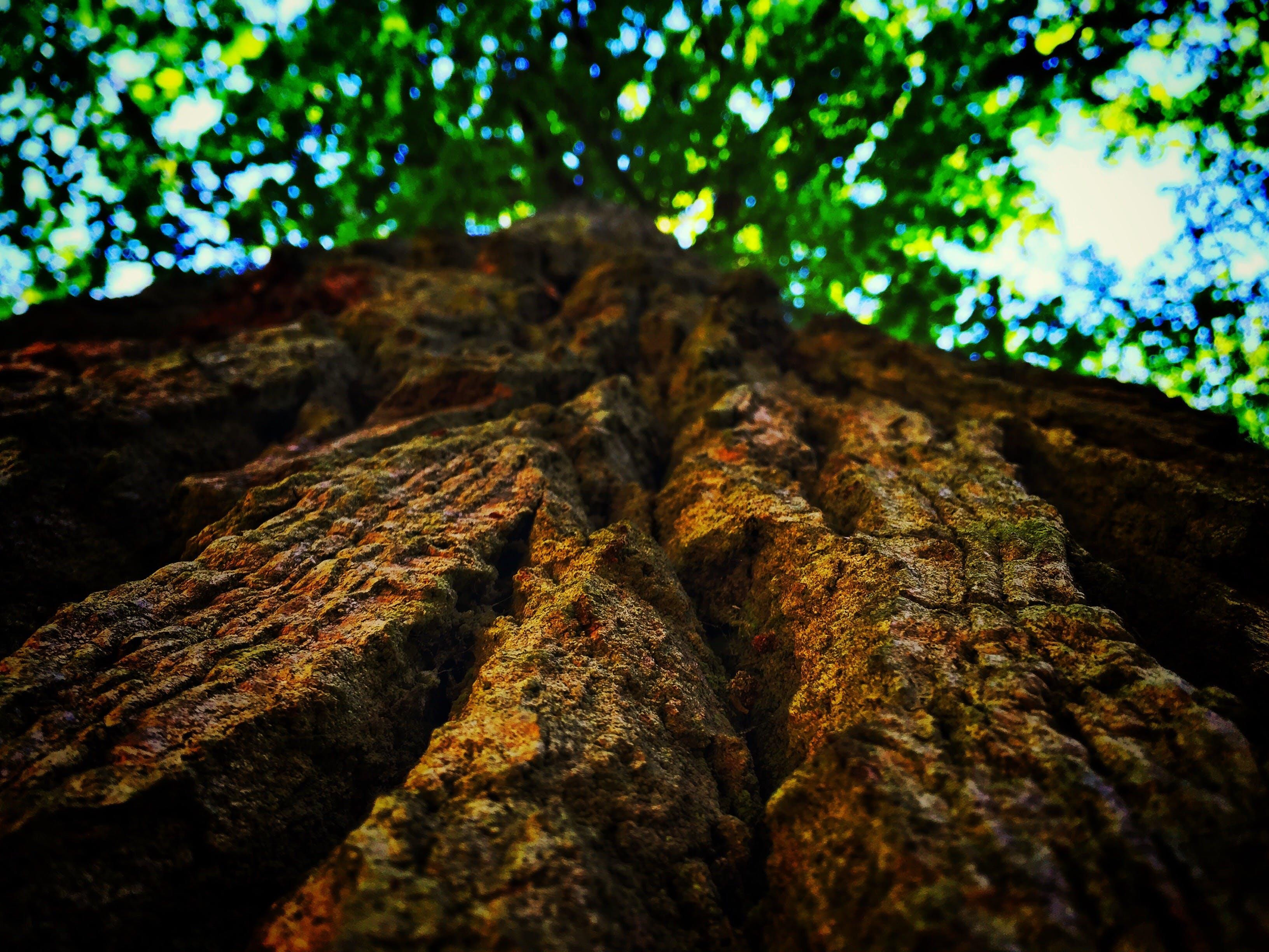 branch, close -up, daylight