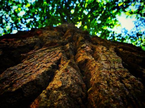 가벼운, 가지, 바위, 자연의 무료 스톡 사진