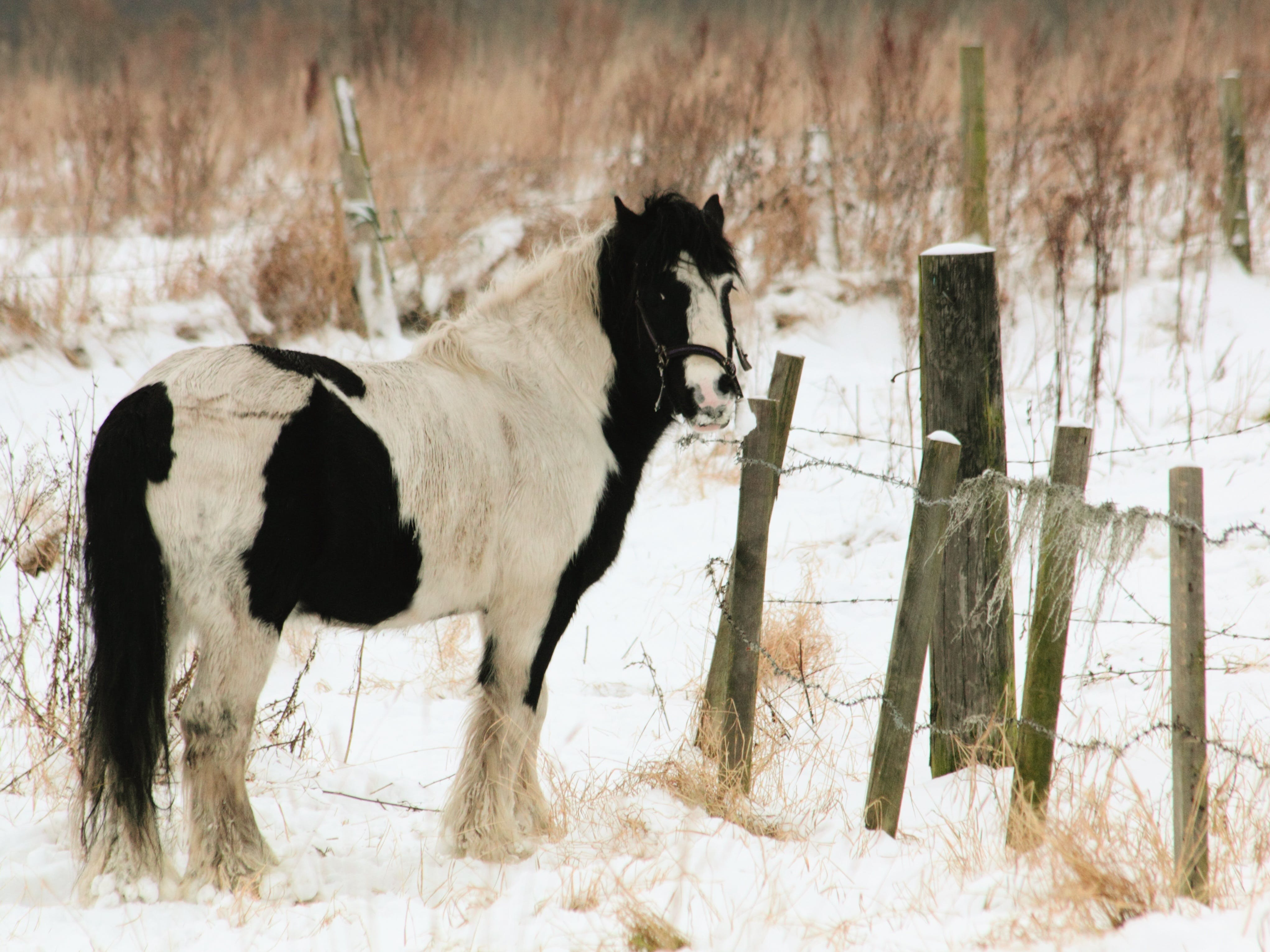 White and Black Horse Standing Near Fence