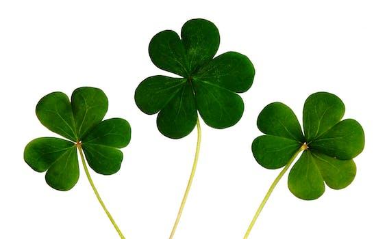 Best marijuana St. Patrick's Day | World of Weed