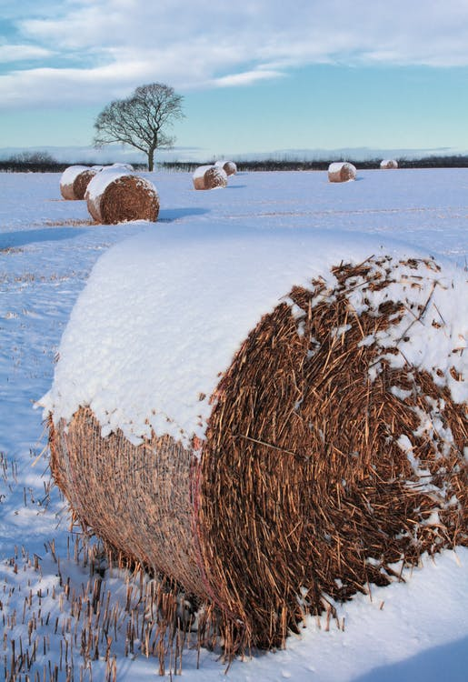 Brown Rolled Hay on Snow Field
