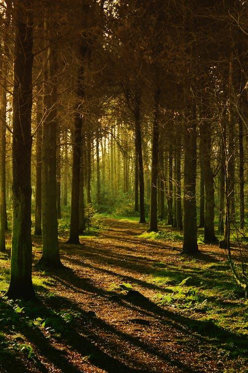 Immagine gratuita di alba, alberi, ambiente