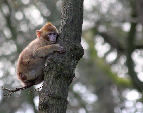 Photos gratuites de à fourrure, animal, arbre, bois