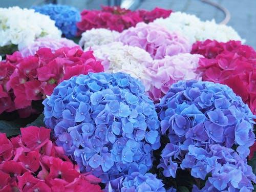 Collection of multicolored hydrangeas with delicate petals