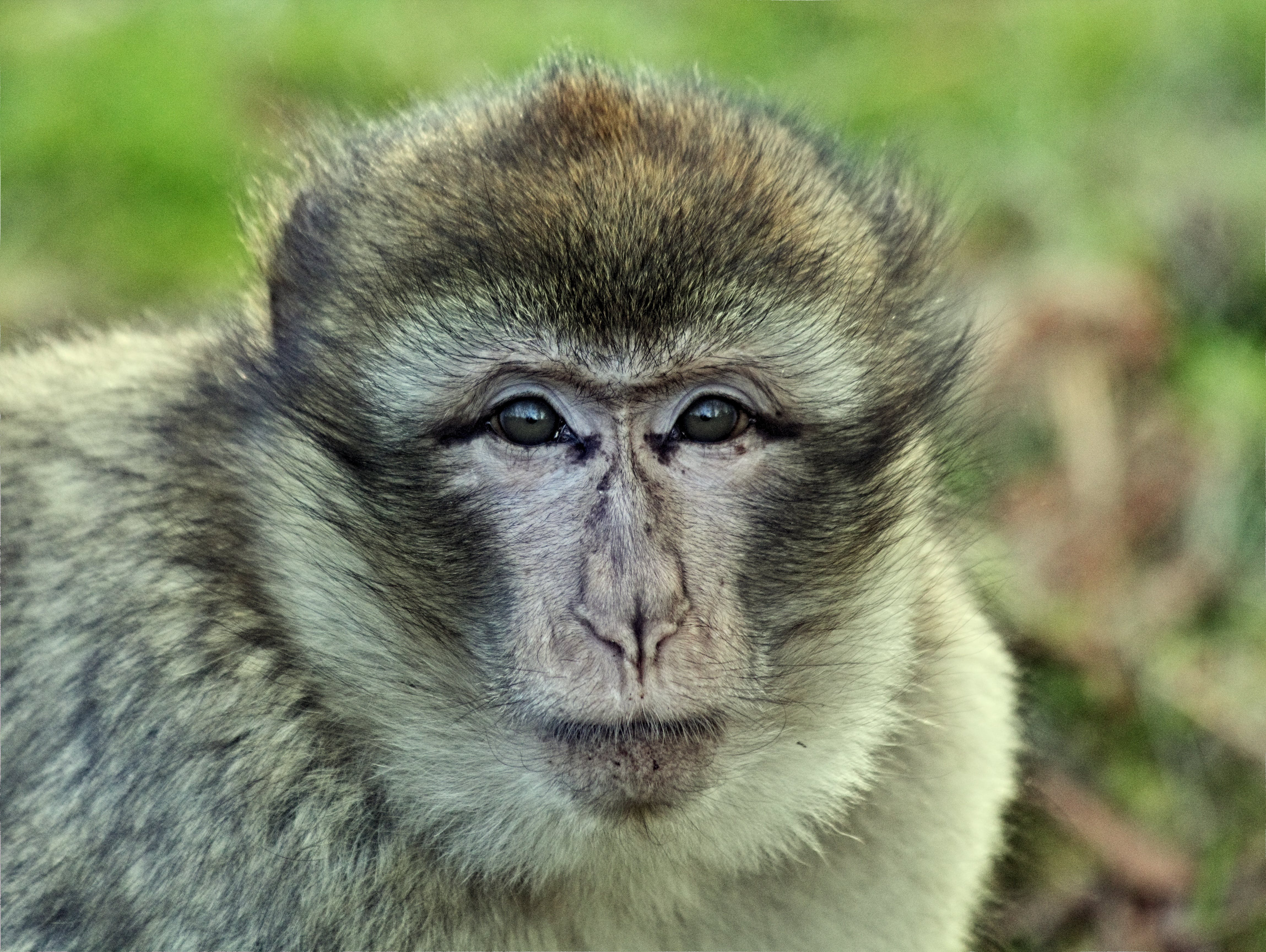 Beige and Brown Monkey