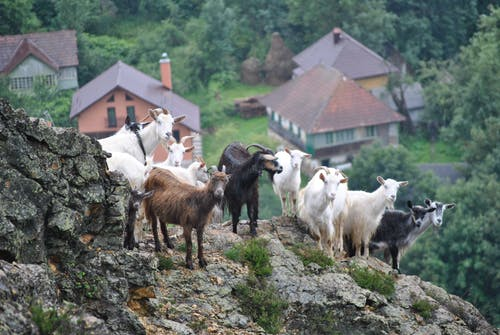 Free stock photo of goats, mountains, rocks