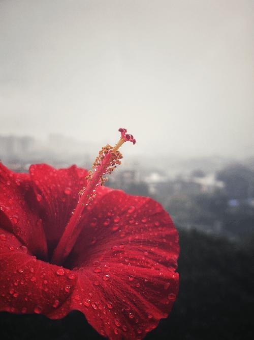 Gratis stockfoto met beton, betonnen jungle, bloeiend, bloemen achtergrond