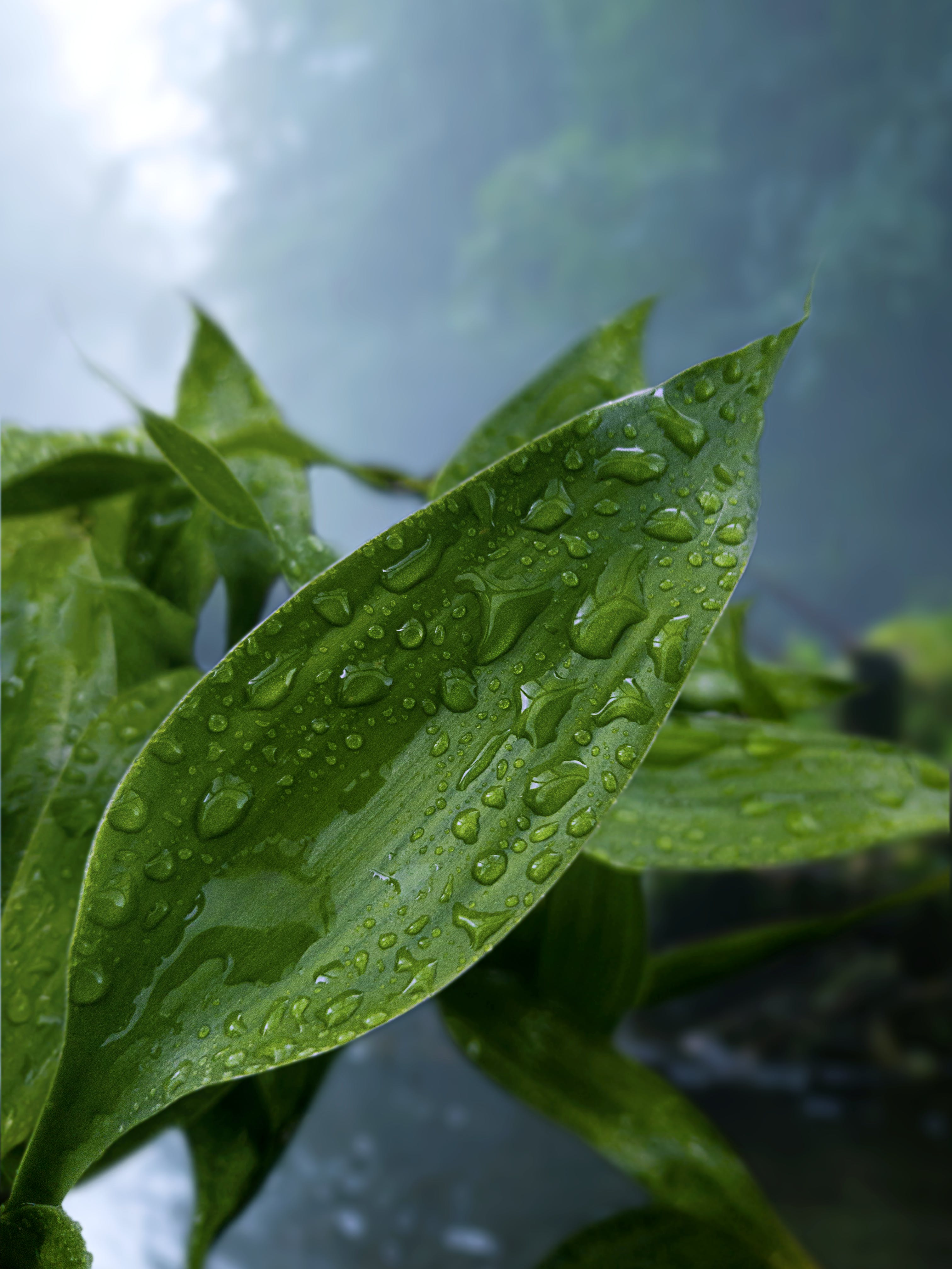 Green Leaf Plant With Droplets