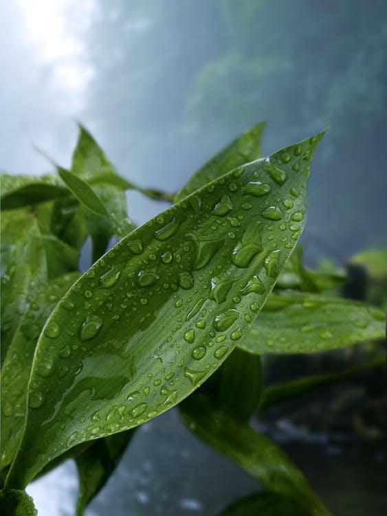 H2O, 낮, 녹색