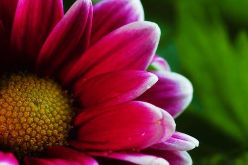 Бесплатное стоковое фото с ботанический, желтый, зеленый, красивый