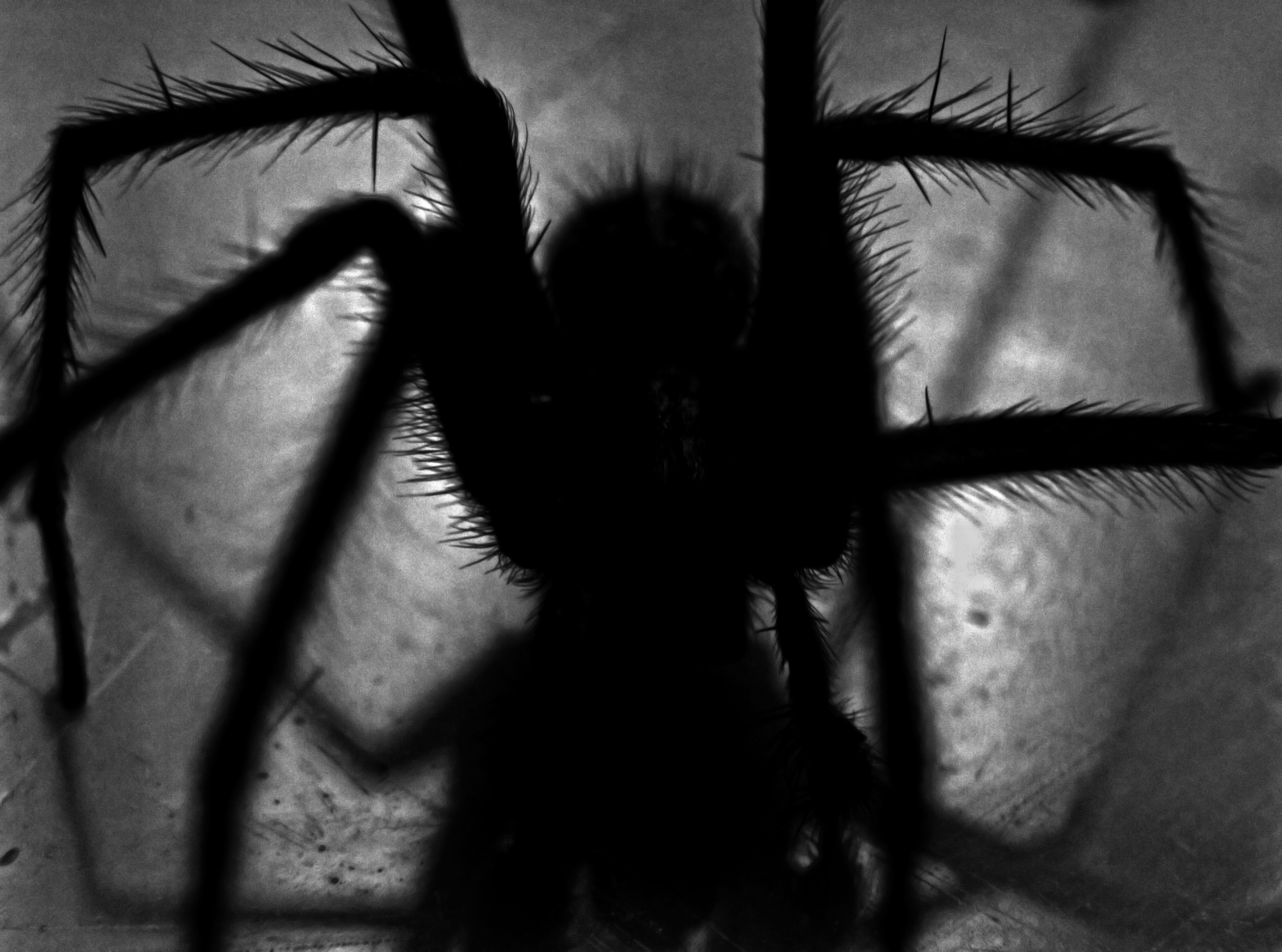 Free stock photo of black-and-white, creepy, dark
