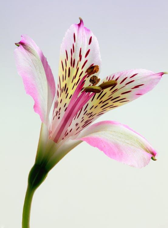 biały, delikatny, flora
