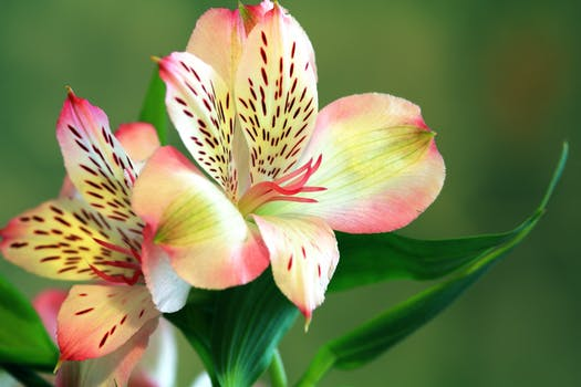 1000 beautiful exotic flowers photos pexels free stock photos free stock photo of nature flowers summer garden mightylinksfo
