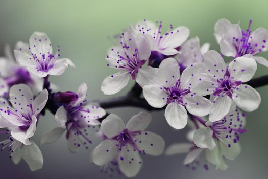 Purple flowers pexels free stock photos white and purple petal flower focus photography mightylinksfo