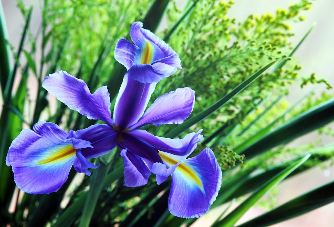 botanikus, évszak, fényes