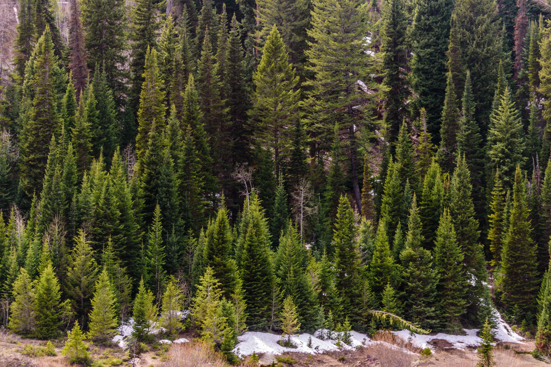 Bird's Eye Photography Of Pine Trees