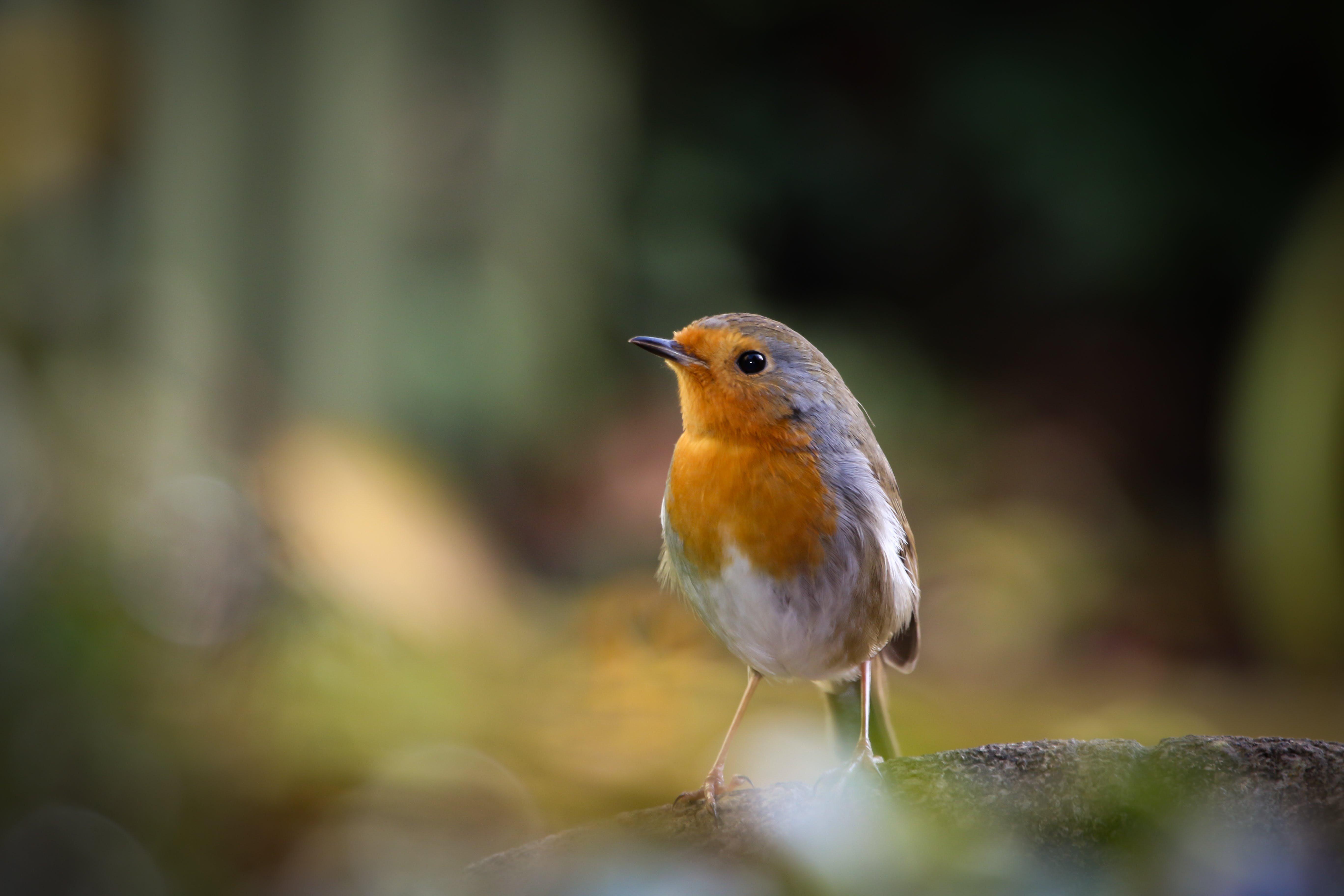 Selective Focus Photography of Yellow, White, and Brown Bird