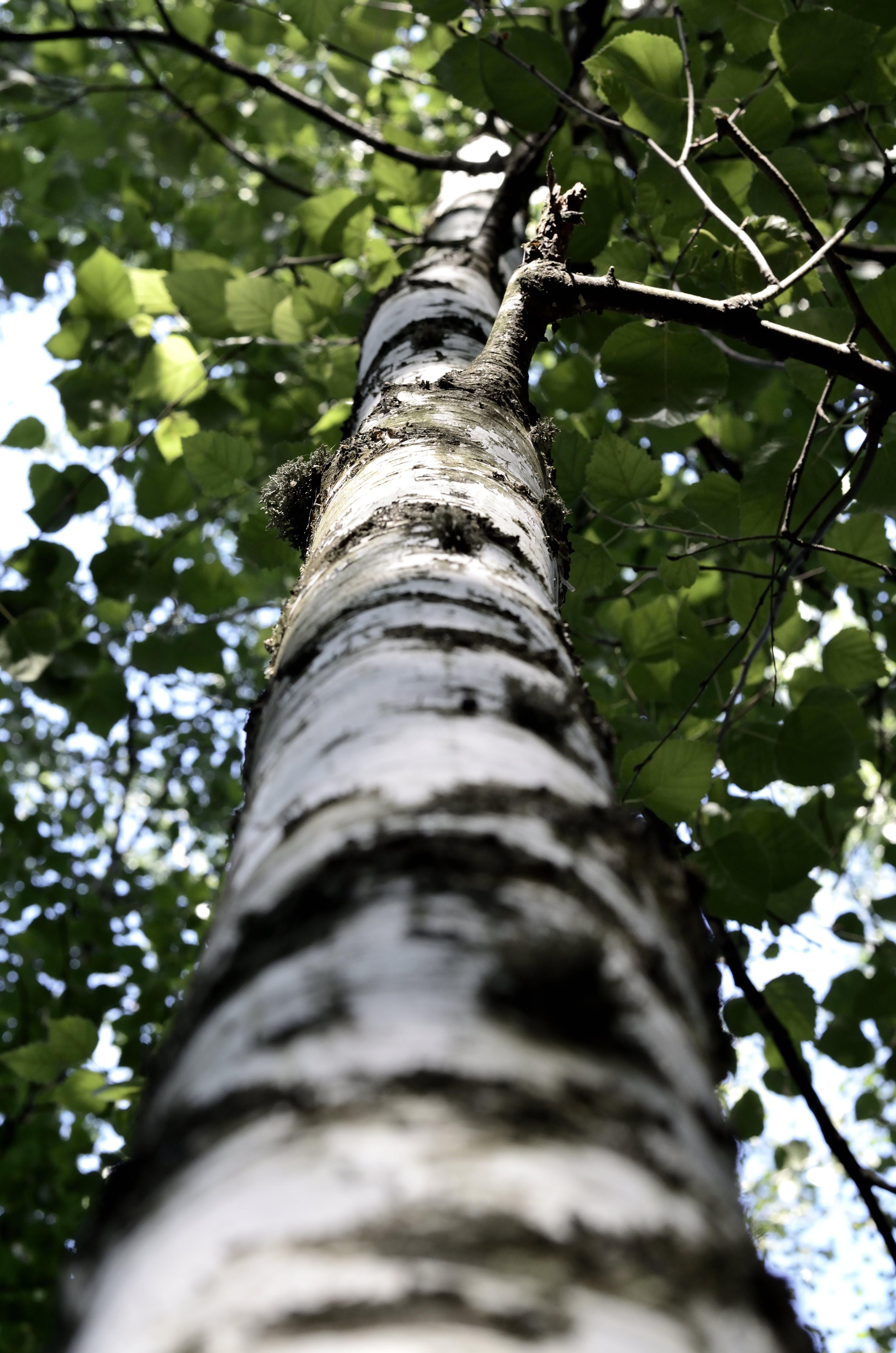 bark, gren, gø