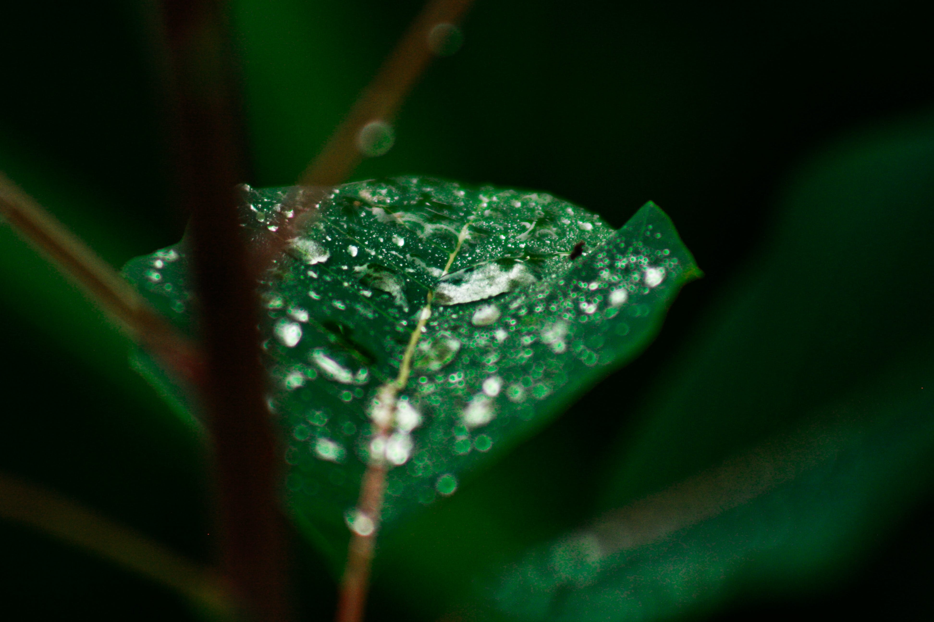 Selective Photo Of Green Leaf Plant With Raindrops