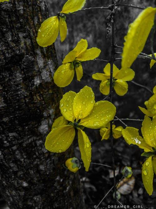 sarı çiçek aşk yağmur damlaları içeren Ücretsiz stok fotoğraf