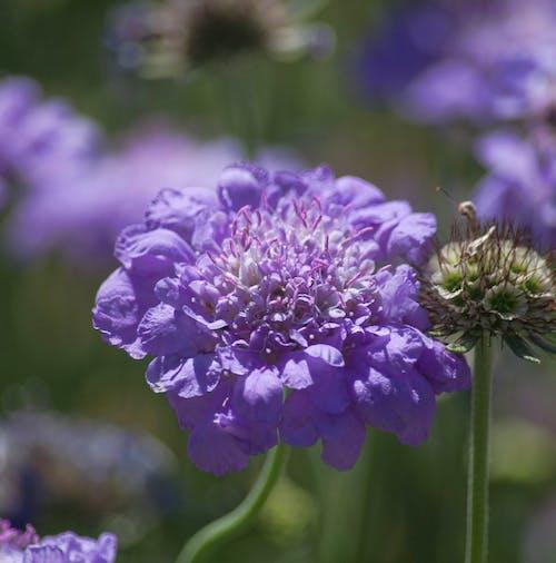 Fotobanka sbezplatnými fotkami na tému detail, farebné kvety, jemný, kvety