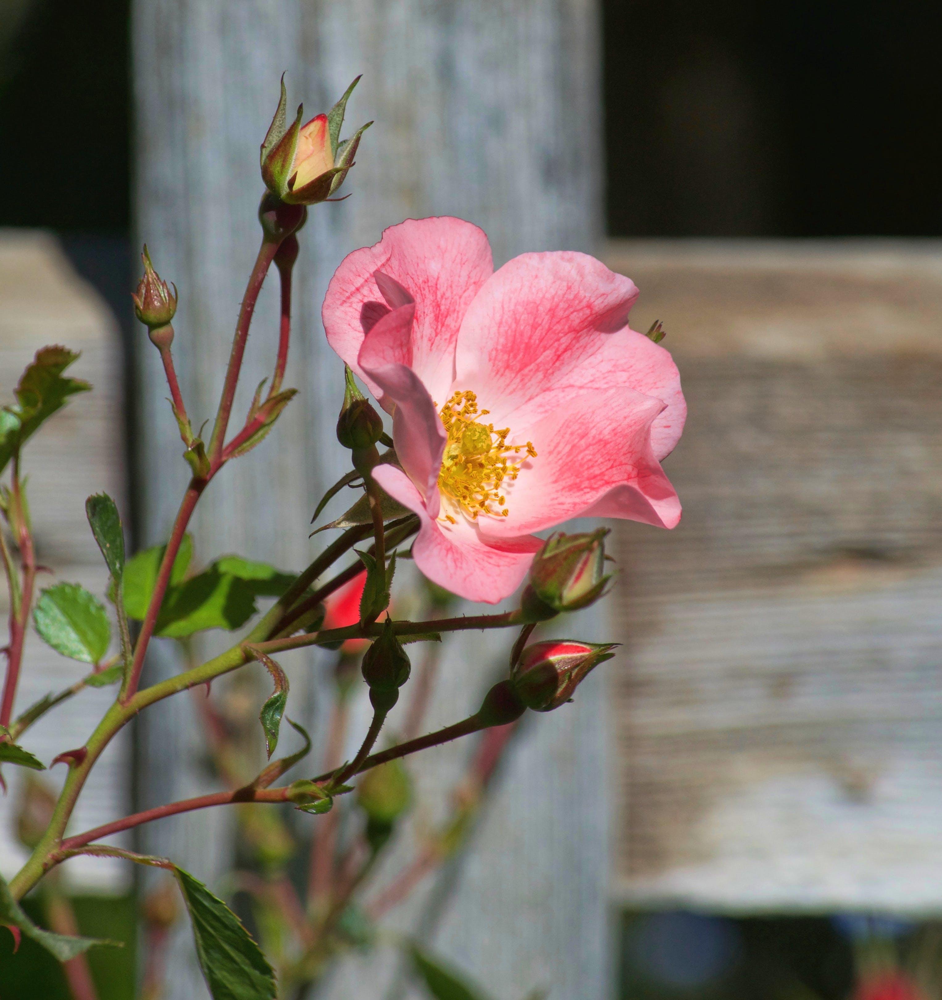 Kostenloses Stock Foto zu blühende blumen, blühen, blumen, botanischer garten