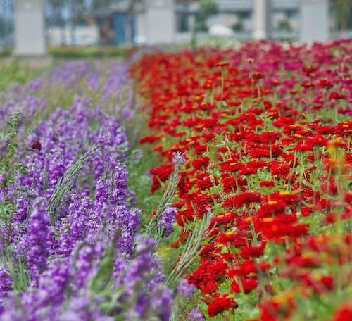 Foto d'estoc gratuïta de brillar, camp de flors, clareja