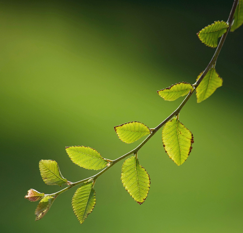Kostenloses Stock Foto zu bäume, detail, grün, licht